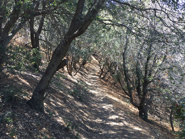 oakshadebugparadise0081917